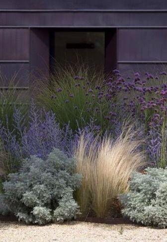 les gramin es ornementales en pots nouvelles tropiflora. Black Bedroom Furniture Sets. Home Design Ideas